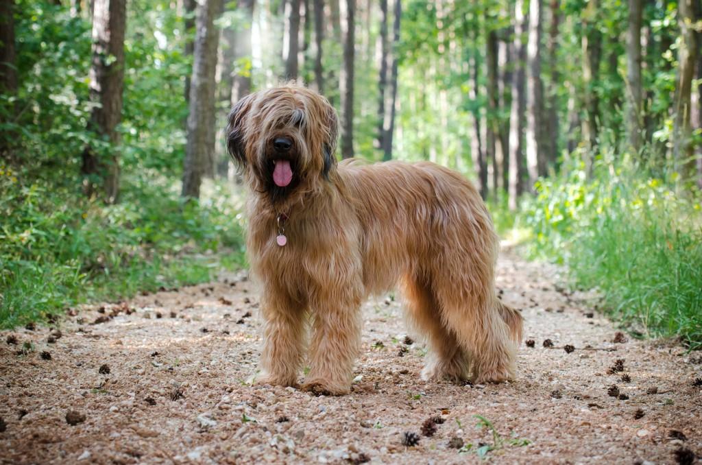 Canis Ferox Borgia Lucrezia