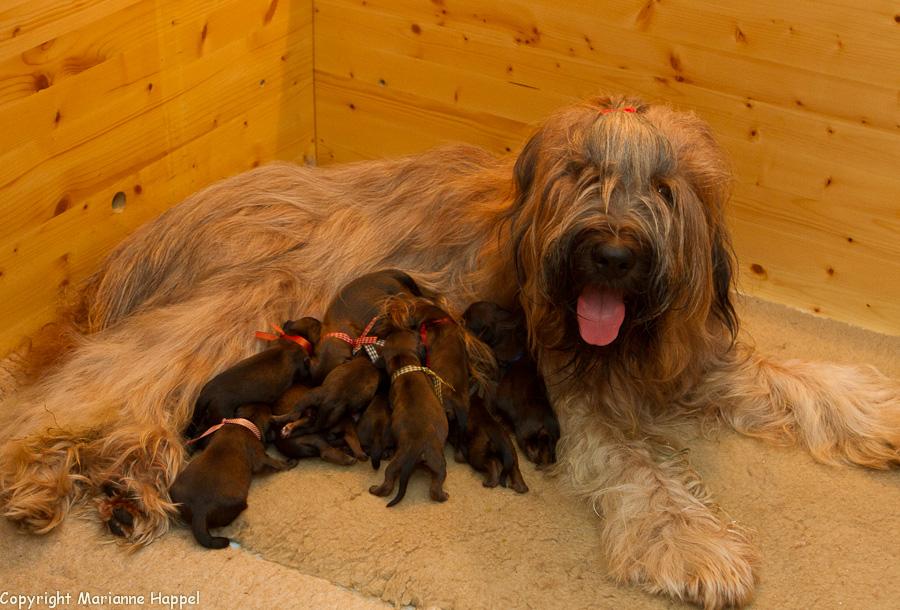 Schnuppe mit Babys